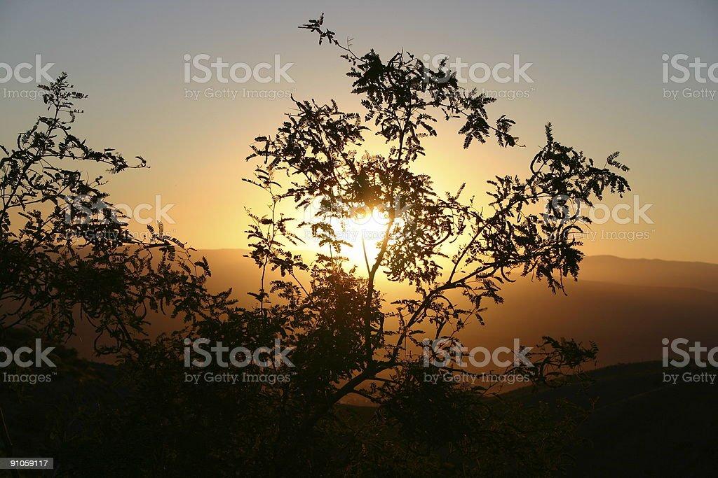 Powstanie przez drzewa zbiór zdjęć royalty-free