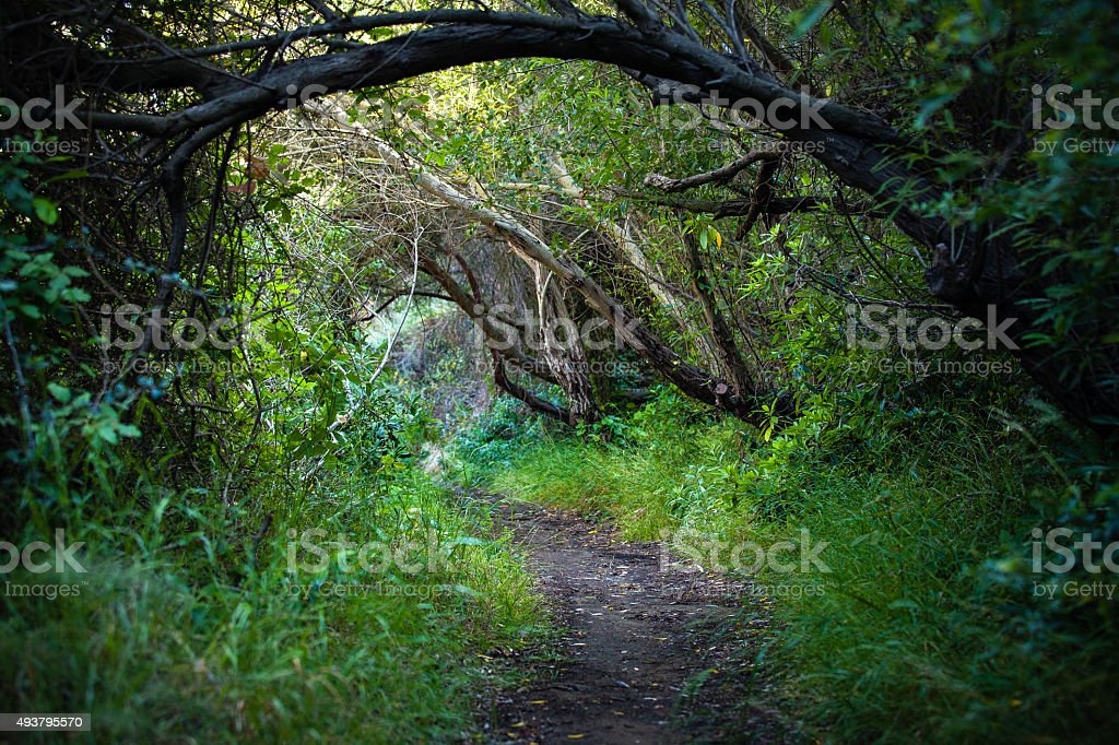 Rivas Trail Through Chaparral, Santa Monica Mountains royalty-free stock photo
