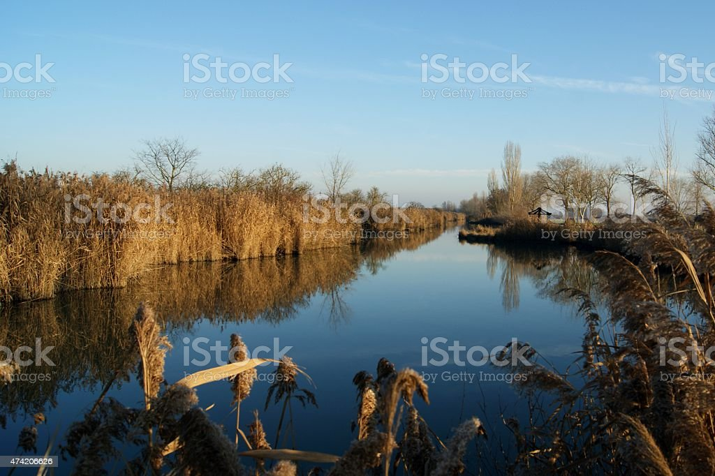River and canes stock photo