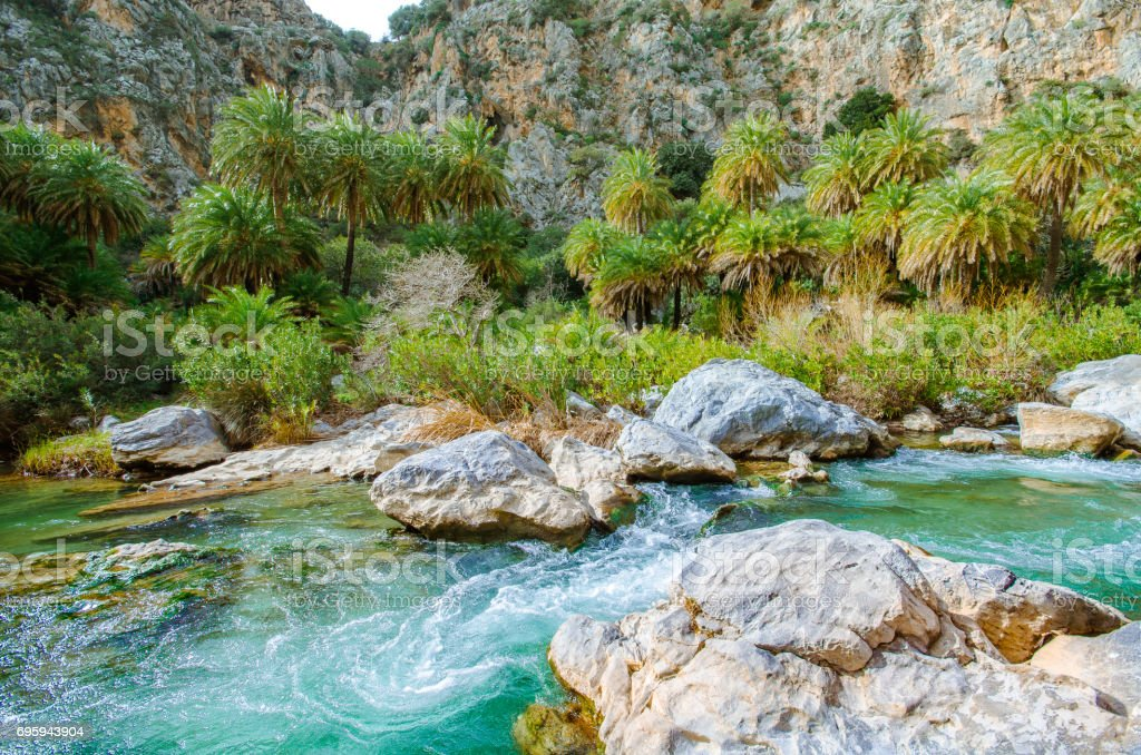 River and palm forest at Preveli, southern Crete , Greece stock photo