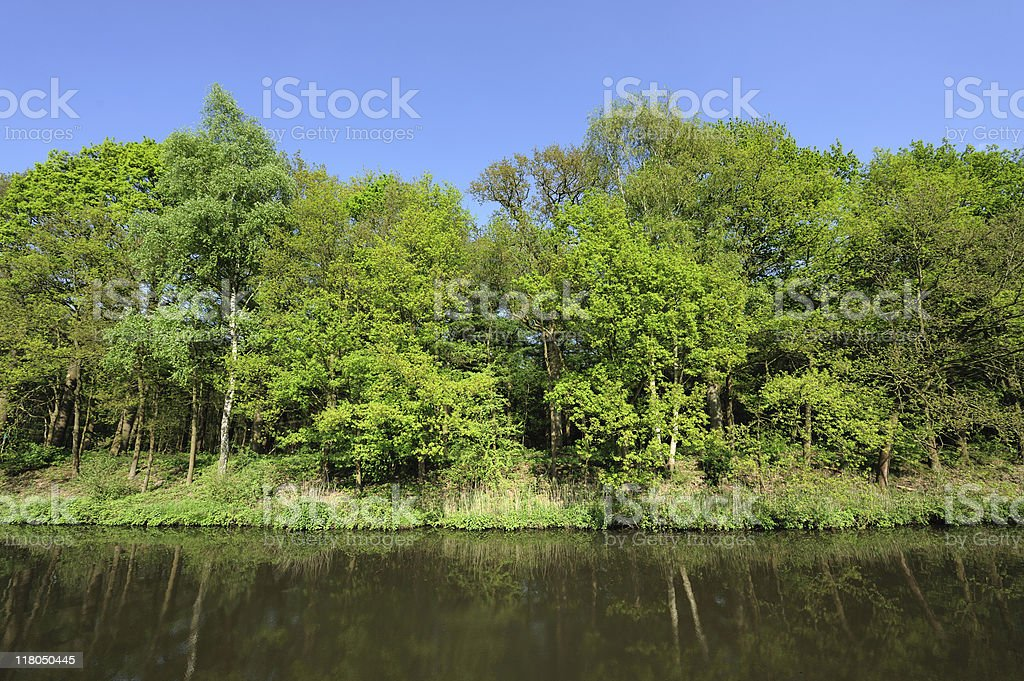 River and spring forest in the Netherlands royalty-free stock photo