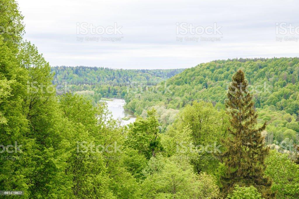 River and wood at Latvia, Sigulda. stock photo