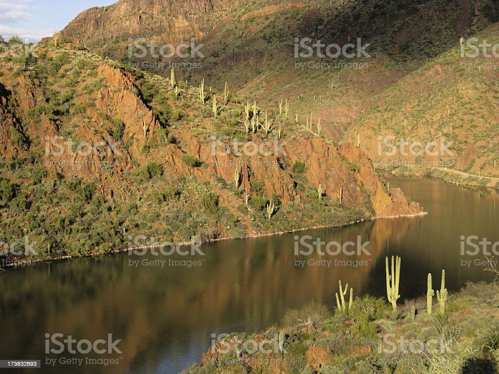 River Arizona Saguaro Cactus stock photo