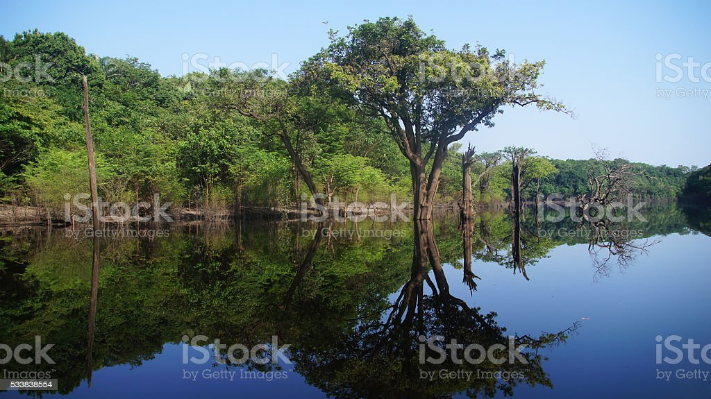 River at rain forest in Amazonas, Brazil stock photo