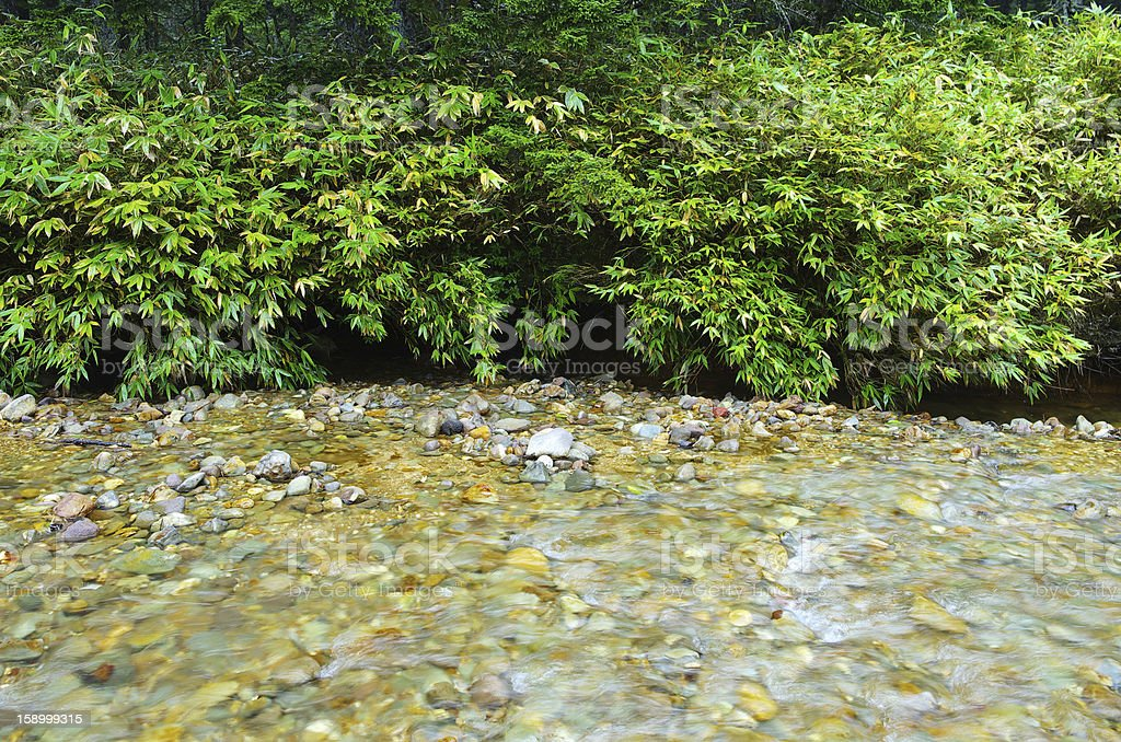 River bamboo royalty-free stock photo