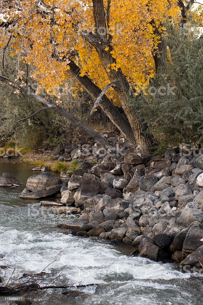 River Bank in Autumn royalty-free stock photo