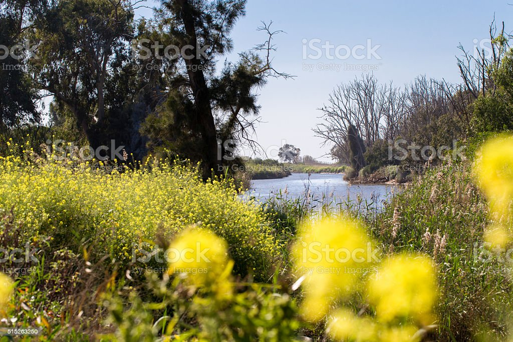 River bank trees bush blossom spring flowers. stock photo