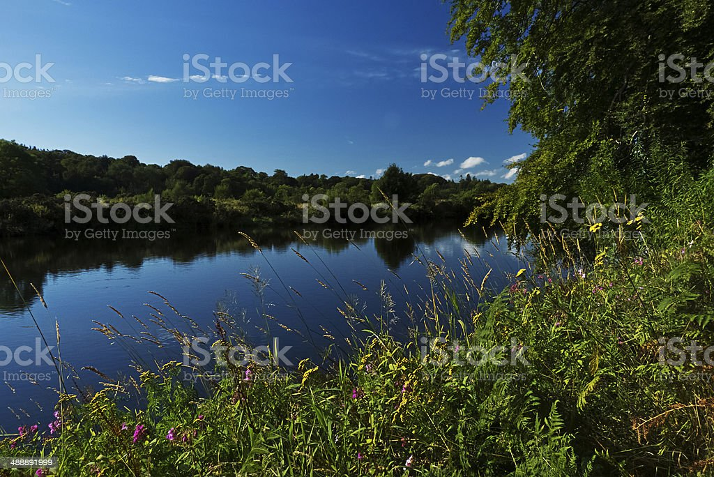 River bank, wild flowers. royalty-free stock photo