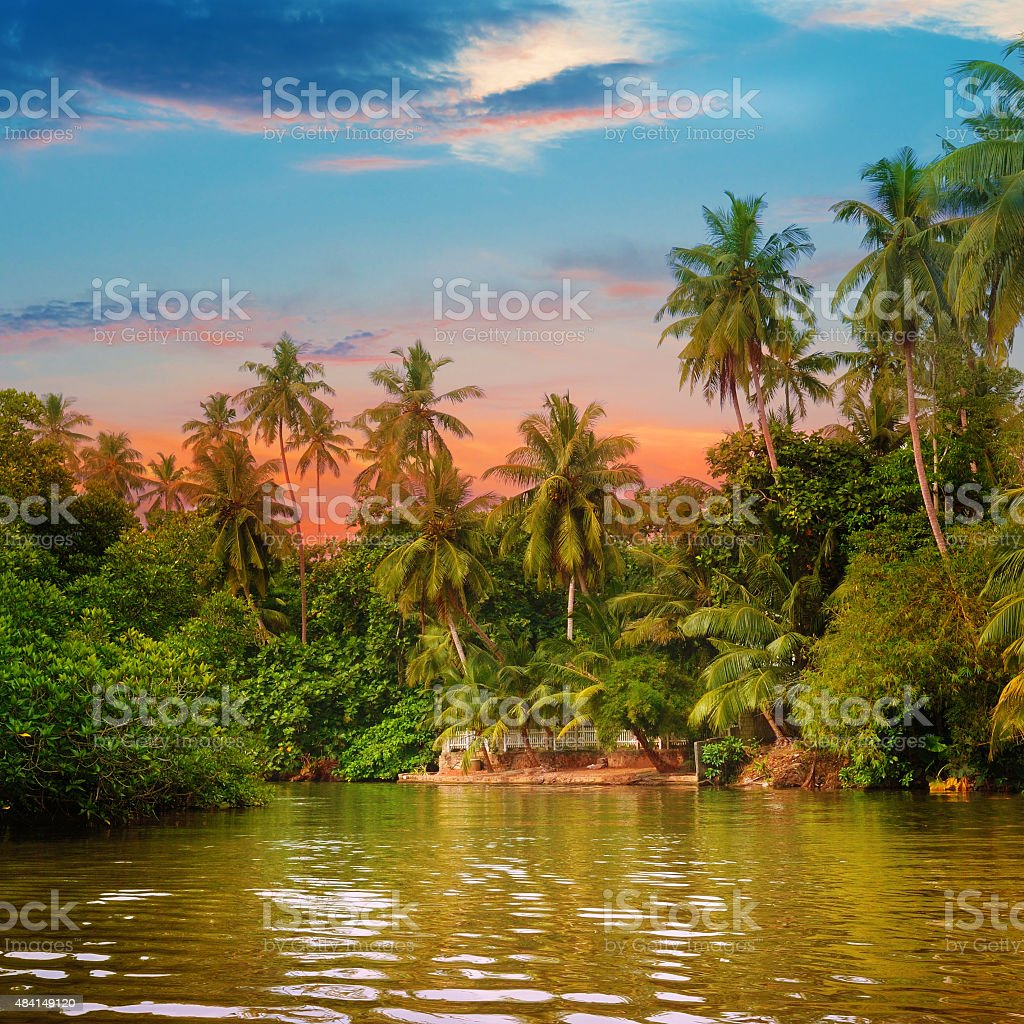 river, beautiful sunrise and tropical palms stock photo