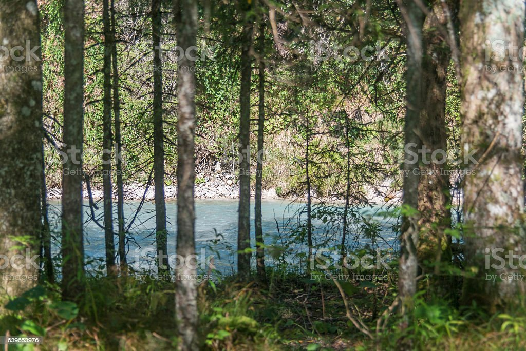 river behind woods forest stock photo