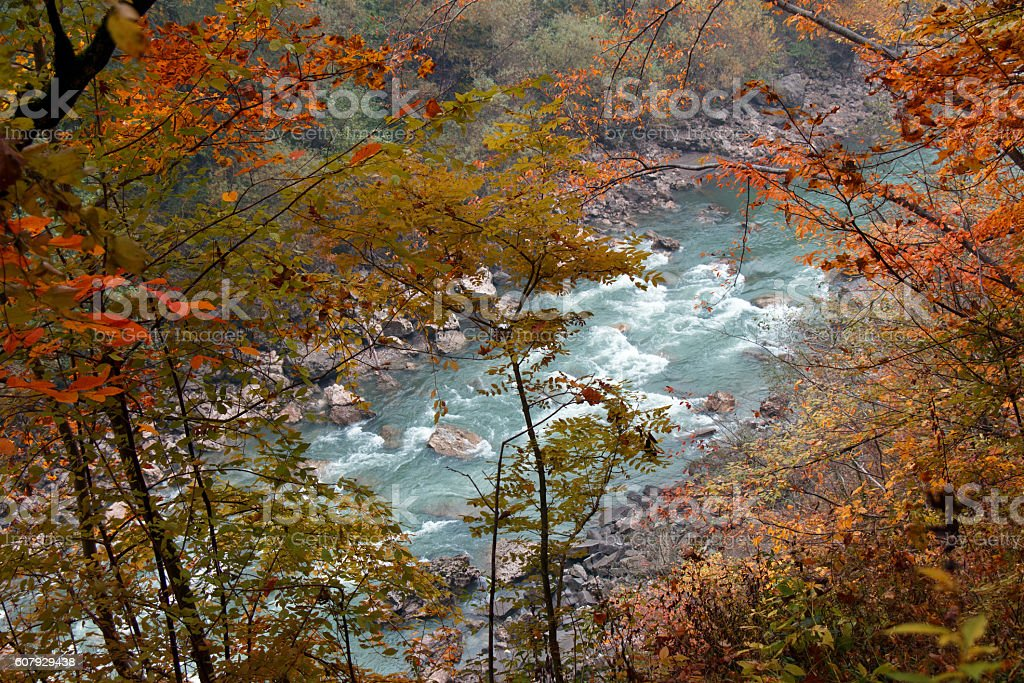 River canyon with trees in yellow, red, orange colorful leaves stock photo