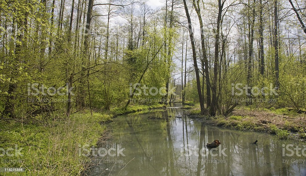 River crossing natural forest in springtime stock photo