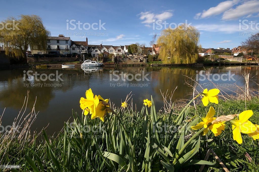 river dafodills stock photo