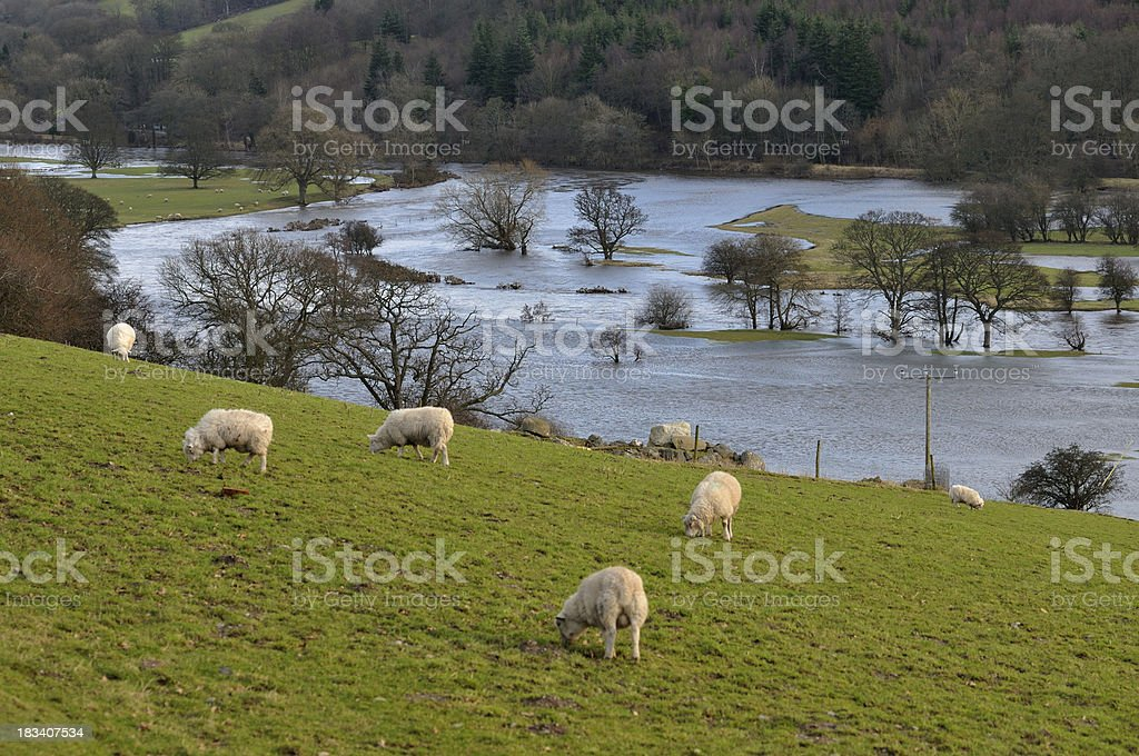 River Dee Flooded stock photo