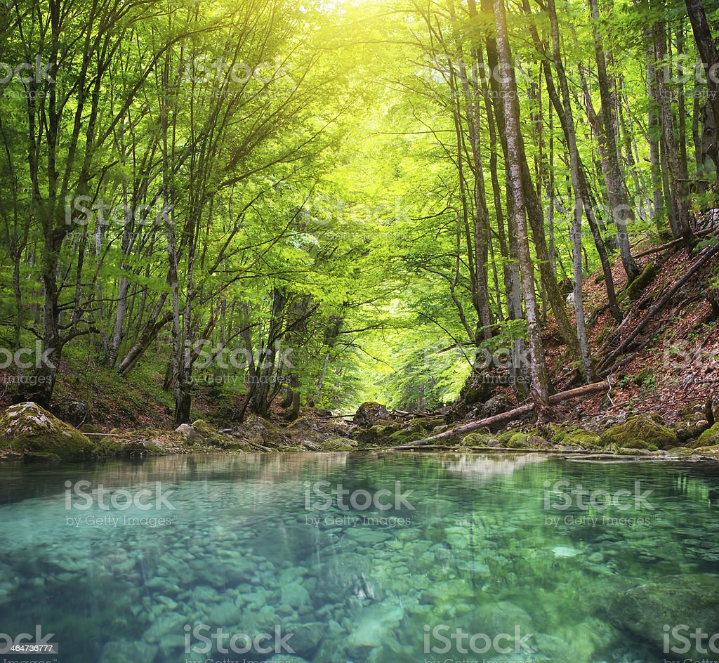 River deep in mountain forest. stock photo