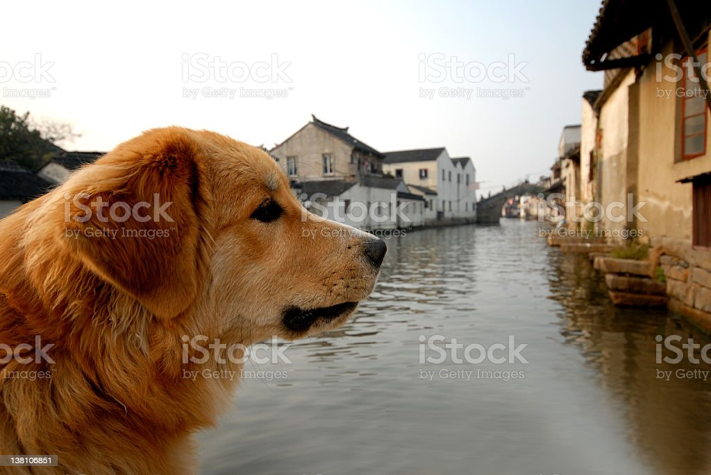 River Dog royalty-free stock photo