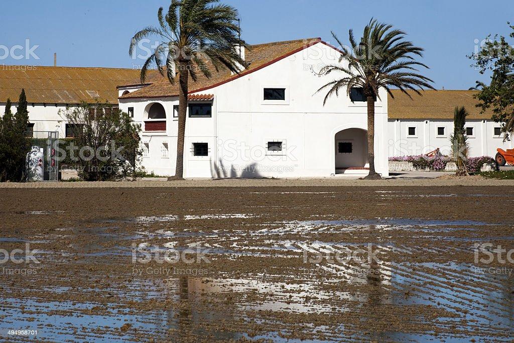 River Ebro Delta agricultural building stock photo