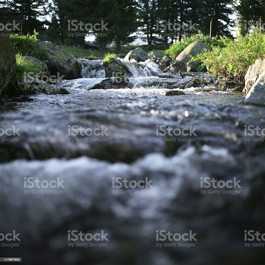 River flow, trees and stones stock photo
