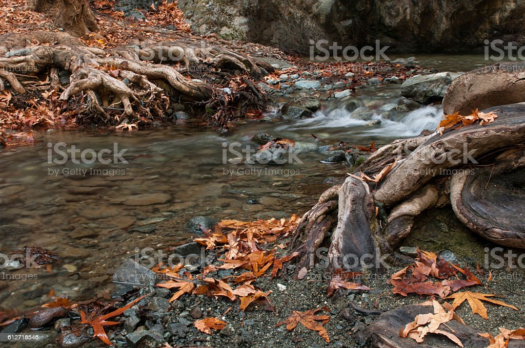 River flowing  between leaves and trees stock photo