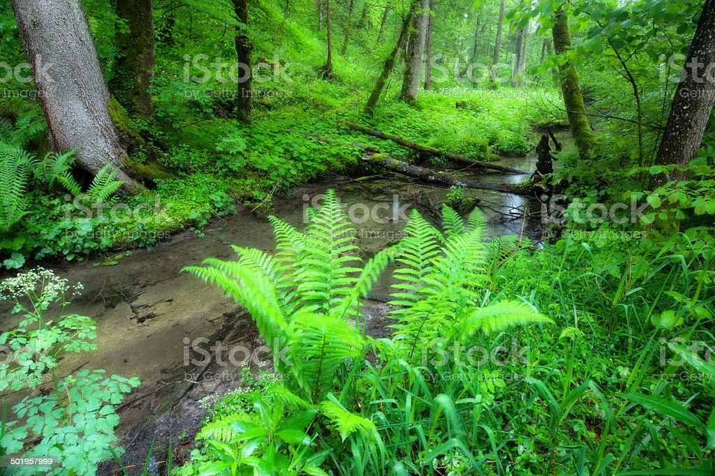 river flowing though wood, tranquil scene stock photo