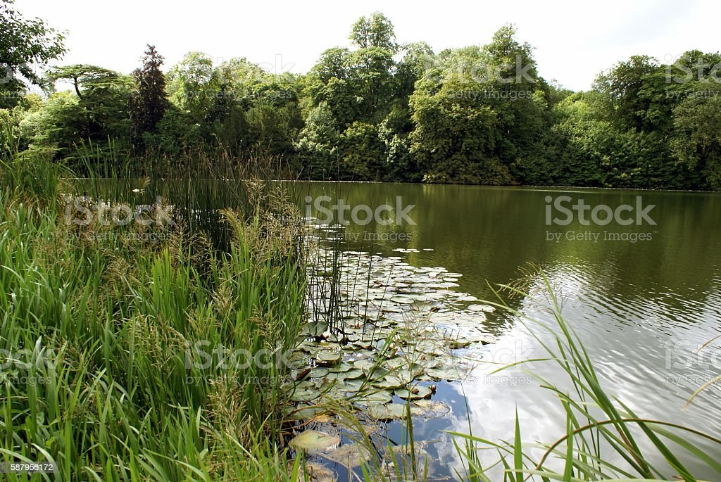 River Glyme in Oxfordshire England stock photo