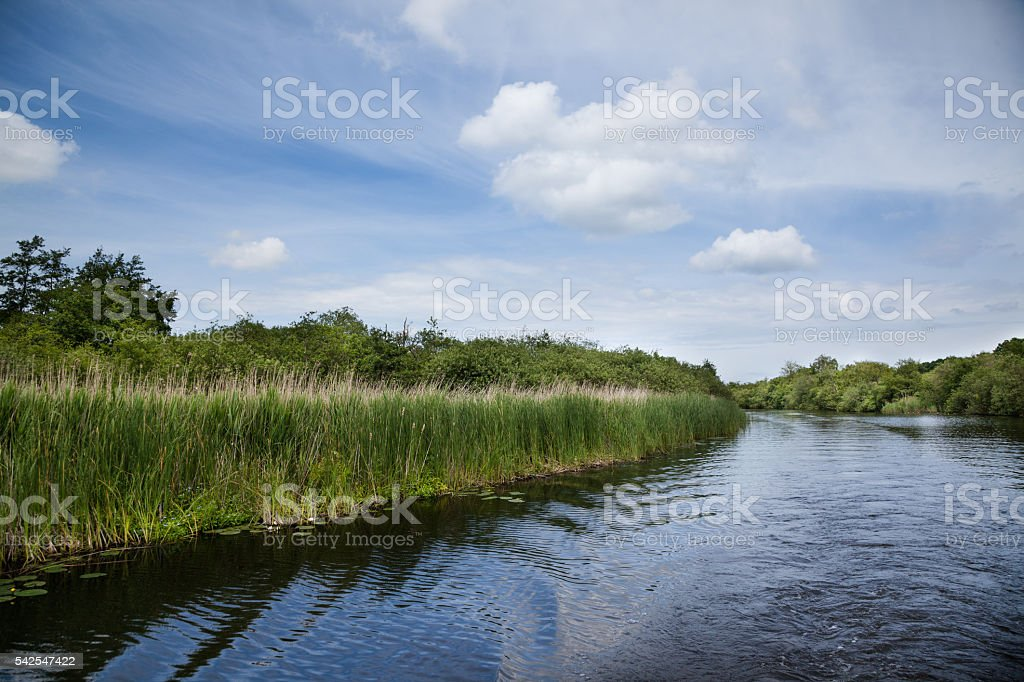 river grasses reeds and sedges on riverbank Norfolk Broads England stock photo