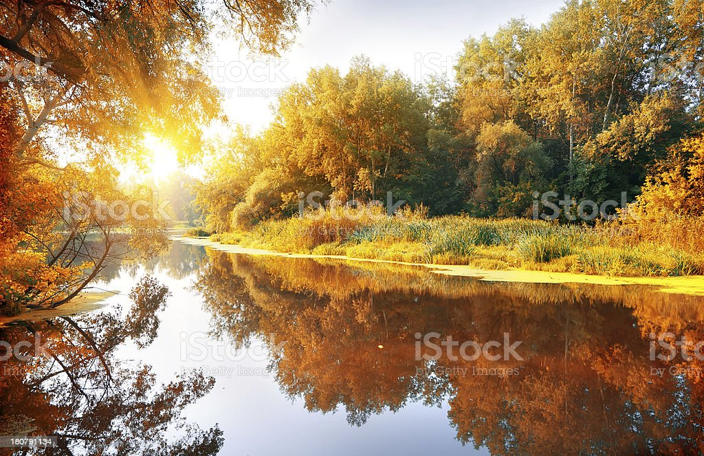 River in a delightful autumn forest stock photo