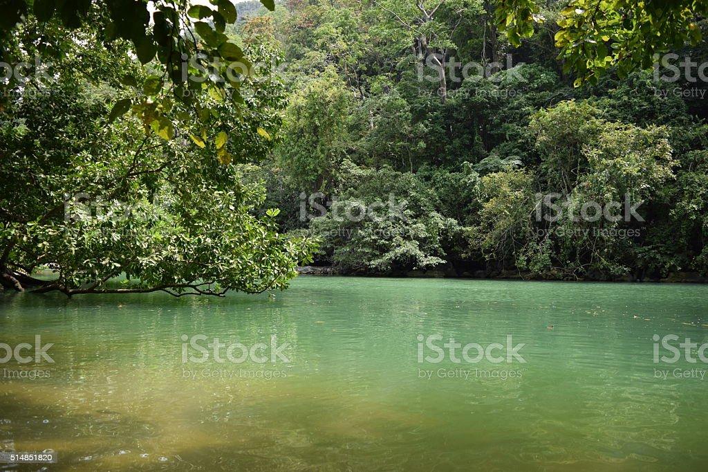 River in Puerto Princesa. stock photo