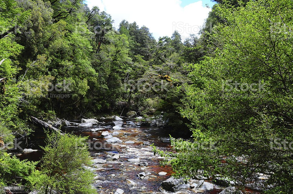 Rio de floresta tropical foto royalty-free