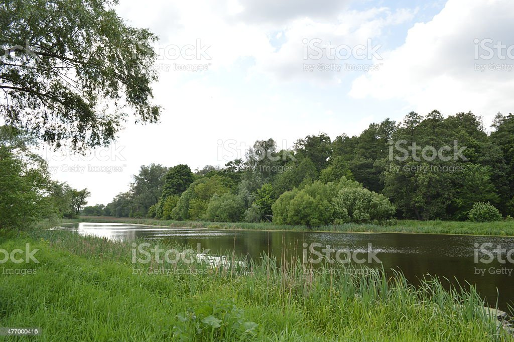 river in spring forest stock photo