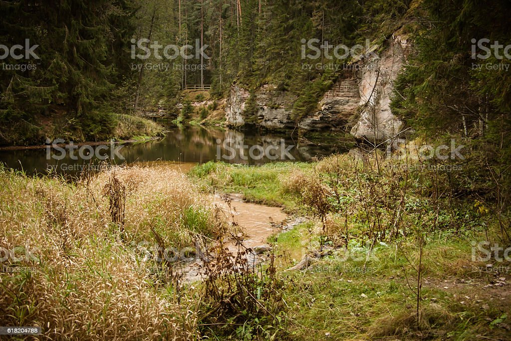 river in the forest and stock photo