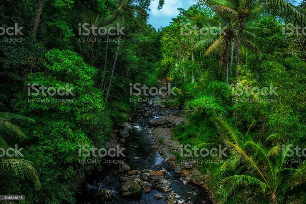River in the jungle of Java stock photo