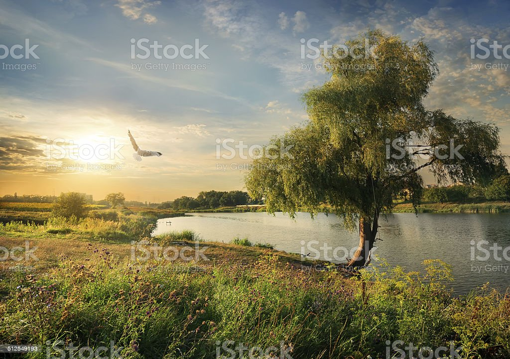 River in the late summer stock photo
