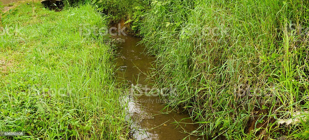 river in the middle of grass field photo taken in stock photo
