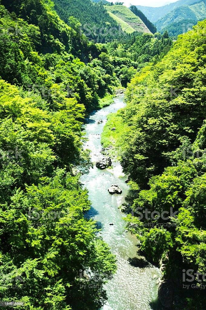 river in the woods stock photo
