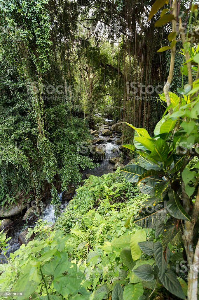 river landscape in temple Gunung Kawi stock photo