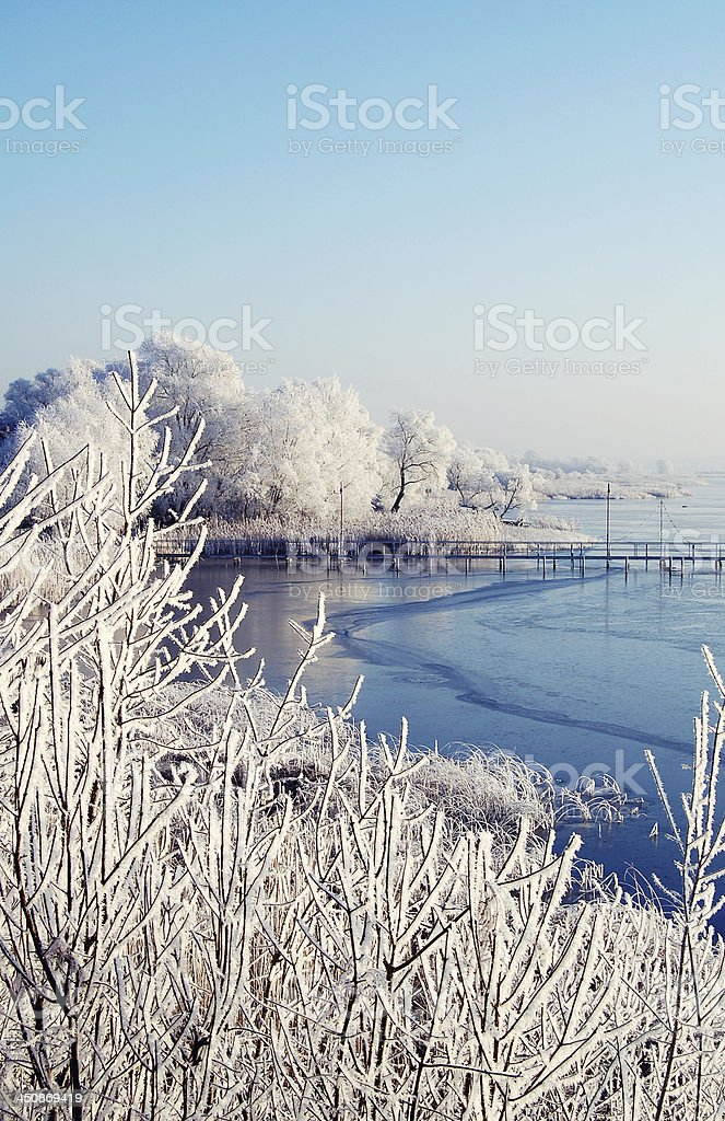 river landscape with frost on willow tree royalty-free stock photo
