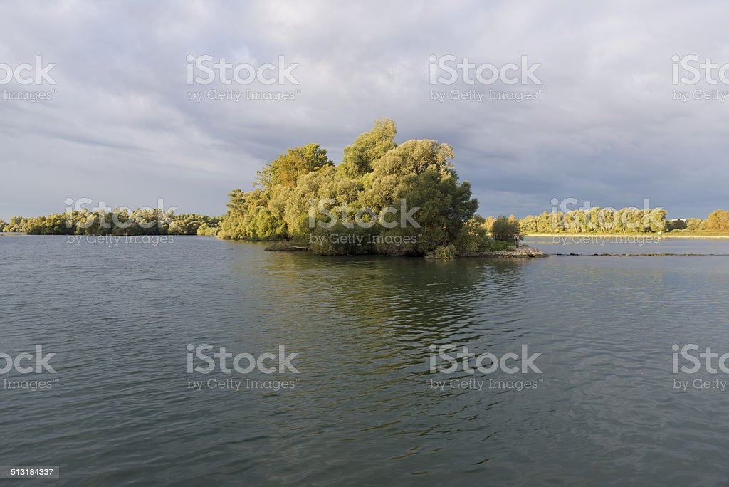 River landscape with white willows , Salix alba stock photo