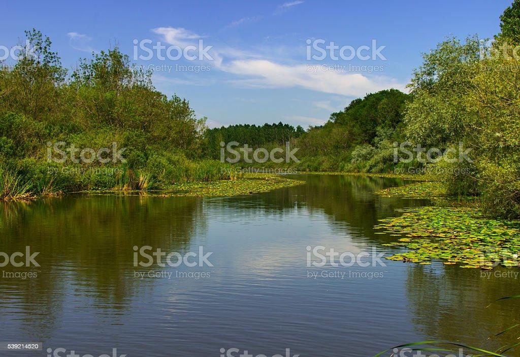 River longoz flooded plains (water meadows) stock photo