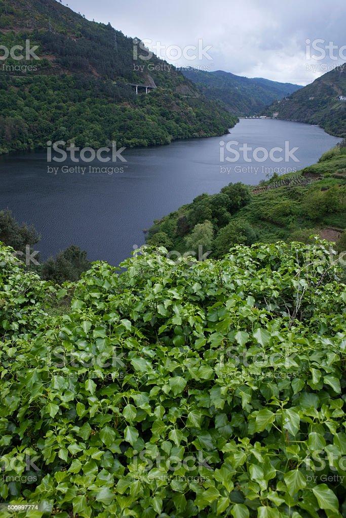 river mino stock photo