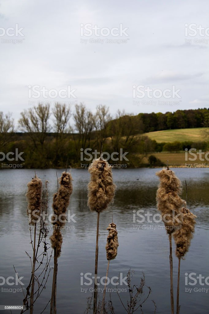 River Misbourne in the Chilterns, England stock photo