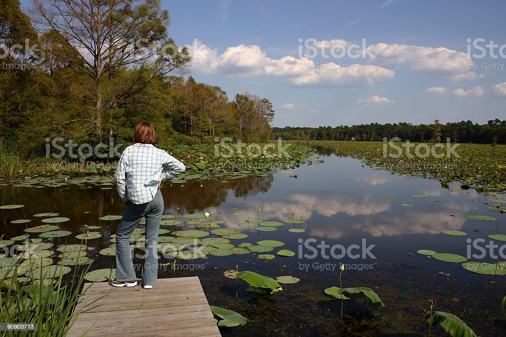 River of Lily Pads royalty-free stock photo