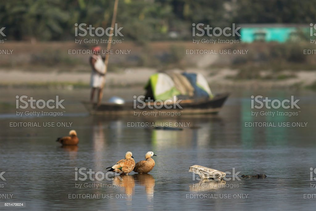 River pollution threats to migratory birds at Siliguri stock photo