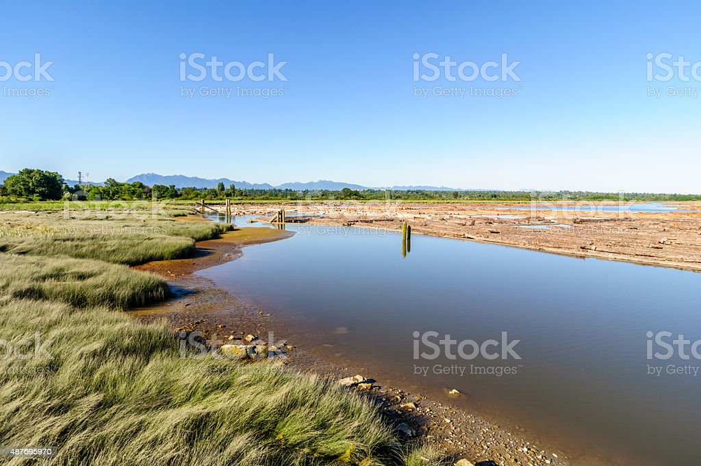 river port with beach grass and floating logs stock photo