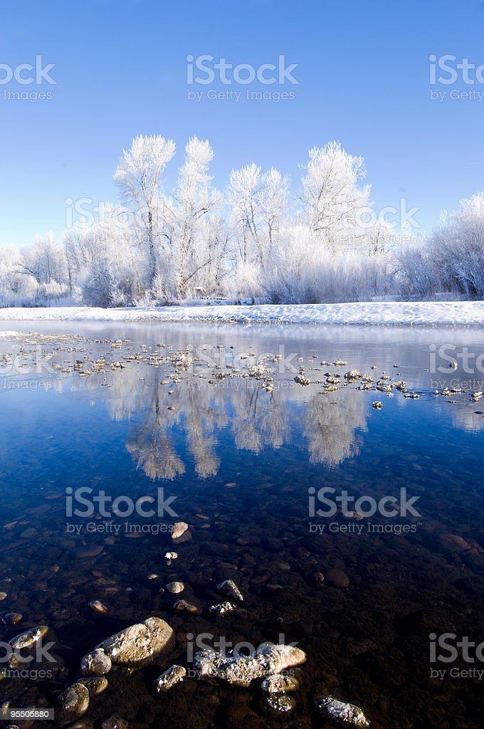River Reflection of Ice Covered Trees stock photo