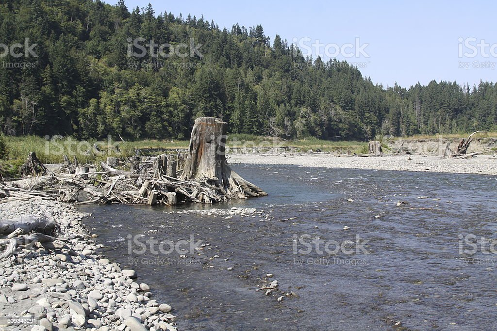River Restoration After Dam and Lake Removal stock photo