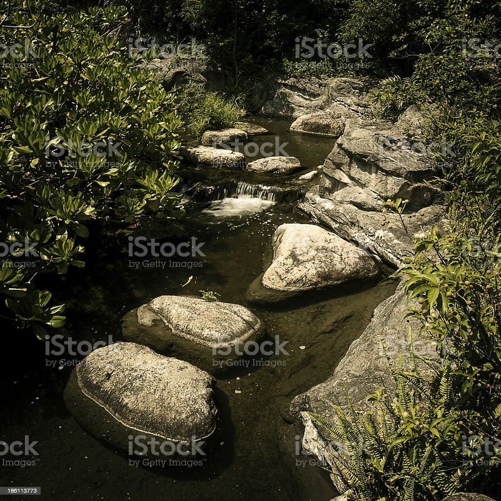 River running between forcks in the forest royalty-free stock photo