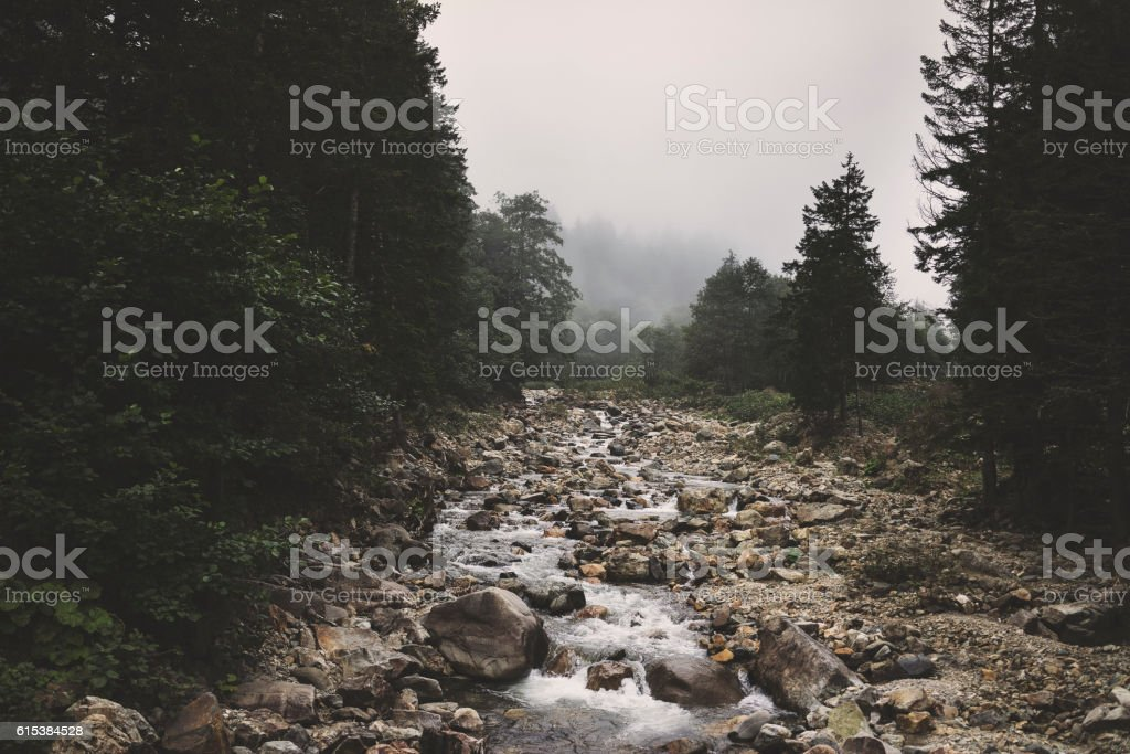 River running through the forest stock photo