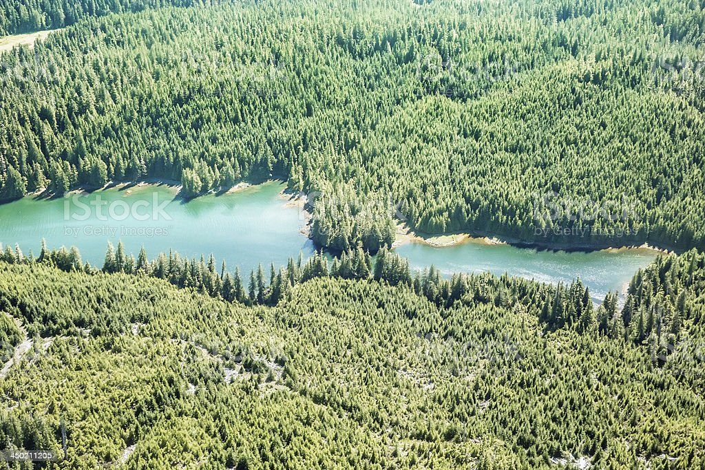 A river cuts through a forest in Ketchikan, Alaska. It is summertime...