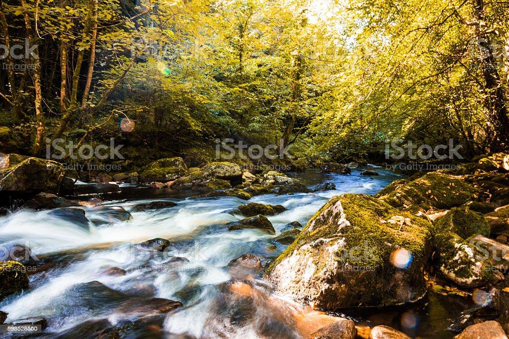 River rushing through autumn forest in Devon, England, UK stock photo